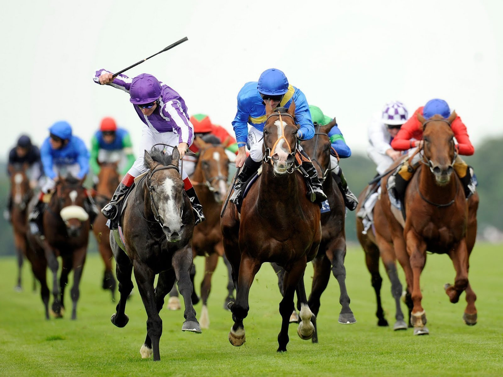 Win Great Horse Game Prizes In World's Greatest Horse Races